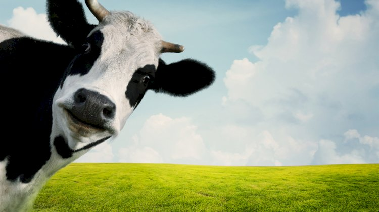 Rumput Tidak Beracun, Tapi Kenapa Manusia Tidak Makan Rumput?