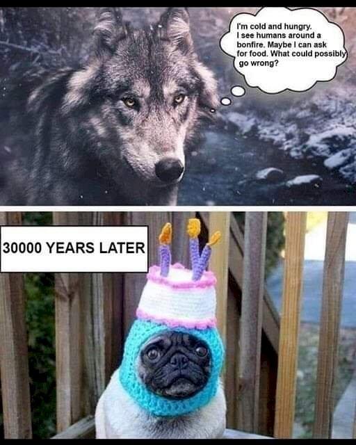 Repotnya Jadi Anjing Zaman Now