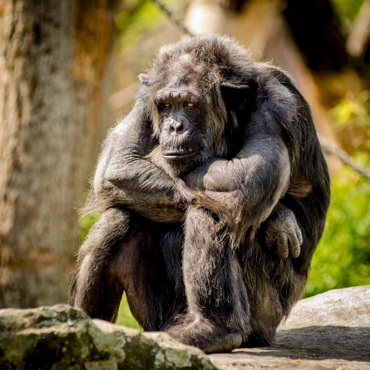 Selamat Memilih Monyet