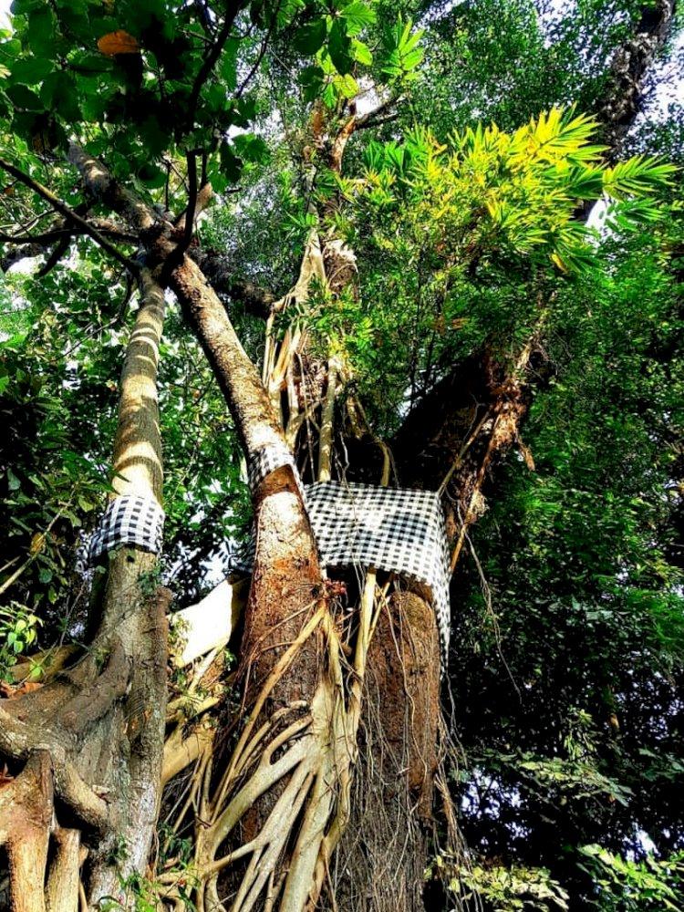 Prabangkara: Penyembah Pohon