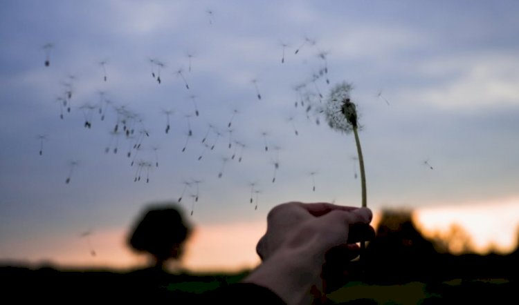 Angin dan Khayalan